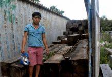 Hai thanh niên lãnh 54 tháng tù giam vì vận chuyển gần 45m3 gỗ giổi