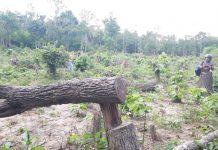 Gia Lai: Bức xúc rừng bị phá, dân viết đơn phản ánh lên tỉnh