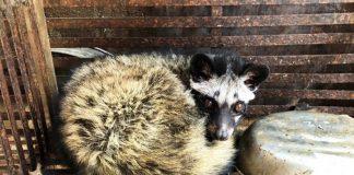 Gia Lai: Xử phạt 01 cơ sở kinh doanh, nuôi nhốt động vật hoang dã trái phép