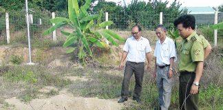 Krông Pa: Tiêu hủy 40 kg thịt heo rừng