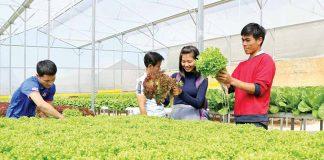 Ngành nông nghiệp Gia Lai: Vượt khó để phát triển ổn định
