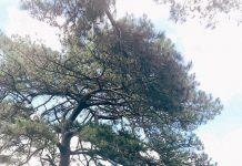 5 địa điểm check-in khi đến Plei-ku dịp Tết nguyên đán