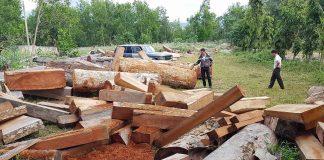 Gỗ khai thác trái phép tại lâm phần của Công ty TNHH Lâm nghiệp Sơ Pai. Ảnh: Văn Ngọc