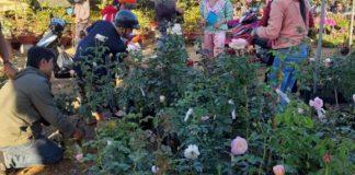 9X phố núi bán hoa hồng Tết, ngày 29 đã thu hơn 400 triệu đồng
