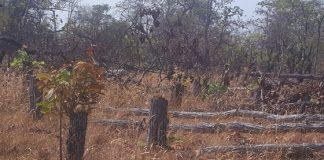 Gia Lai: Có hay không cán bộ tiếp tay để lâm tặc phá hơn 7,3ha rừng