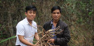 Săn 'lộc' đầu năm: Xuyên rừng Kon Pne đào củ khỏe, uống ai cũng mê