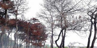 Gia Lai: 9 cán bộ biến đất rừng thành đất cá nhân
