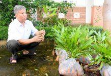 Chuẩn bị cây giống cấp hỗ trợ cho người dân trồng rừng. Ảnh: Mộc Trà