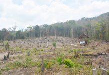 Hiện trường khu vực rừng bị hủy hoại. Ảnh: Cao Phong