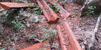 Khởi tố vụ phá rừng lấy gỗ mun trong VQG Phong Nha - Kẻ Bàng