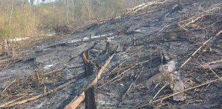 Khu vực đất rừng bị chặt, đốt. Ảnh: Yên Lê