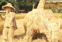 Quảng Ngãi: Độc đáo bện trâu vàng bằng rơm ở 'Lễ hội ngày mùa'