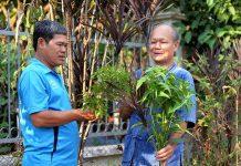 Cây huyết dụ, hoàng ngọc, đinh lăng được nhiều gia đình trồng để dùng khi đau ốm.      Ảnh: M.T