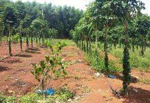 Gia Lai: Vợ giám đốc công ty lâm nghiệp lấn chiếm đất rừng