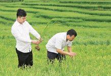 Khẩn trương phòng, chống dịch bệnh trên cây trồng, vật nuôi