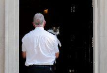 Người dùng mạng Anh mệt mỏi Brexit, đề cử mèo Larry làm thủ tướng mới