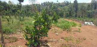 Vợ giám đốc lâm nghiệp chiếm đất rừng: 'Xin cũng ngại'