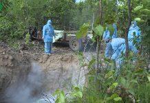 Tỉnh Gia Lai đã tiêu hủy gần 1.200 con lợn nhiễm bệnh tả lợn Châu Phi.