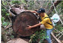 Làm rõ 'đại công trường gỗ' trong rừng sâu ở Gia Lai