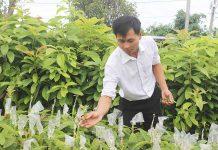 Cây giống bơ chất lượng cao của Công ty TNHH Xuất nhập khẩu Bơ Mỹ Hoàng Gia (thị trấn  Ia Kha) chuẩn bị cung cấp cho người dân để trồng.  Ảnh: N.D