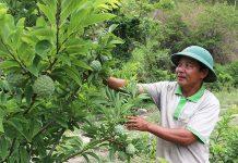 Ông Trần Văn Khánh (thôn 1, xã Hà Tam) chăm sóc vườn cây với hàng chục loại cây ăn quả.   Ảnh: N.M
