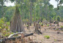 Người dân lấn chiếm đất rừng để trồng cây nông nghiệp. Ảnh: L.G