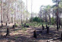 Nhiều diện tích đất lâm nghiệp tại Mang Yang bị lấn chiếm. Ảnh: Văn Ngọc