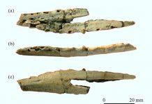 Các phần hóa thạch - Ảnh: Shu-an Ji