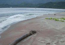 Cát ngọc hồng lựu trên bờ biển một hòn đảo thuộc Papua New Guinea - Ảnh do nhóm nghiên cứu cung cấp