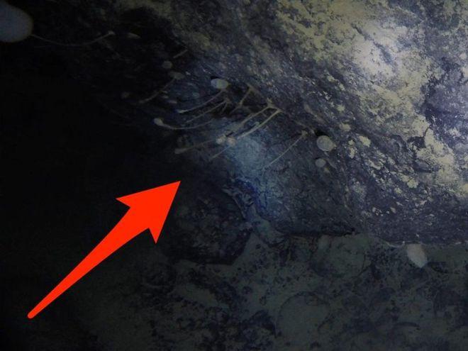Một trong hai động vật lạ vừa được tìm thấy bên dưới băng tầng Nam Cực. Ảnh: SỨ MỆNH KHẢO SÁT NAM CỰC CỦA ANH