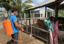 Nhiều hộ chăn nuôi chủ động phun thuốc tiêu độc, khử trùng xung quanh chuồng trại để phòng trừ dịch bệnh. Ảnh: Vũ Chi