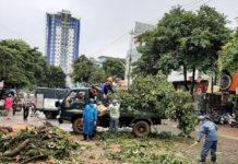 Pleiku: 3 cây xanh ngã đổ do mưa lớn