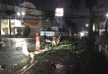 Cây xanh trên đường Hùng Vương bị ngã ra lòng đường. Ảnh: R