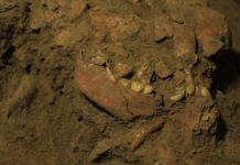 Phát hiện được xương hóa thạch của thời kỳ Toalean. Nguồn: businessinsider