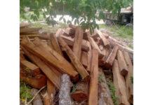 Số gỗ tang vật được đưa về Hạt Kiểm lâm huyện Ia Pa để tiếp tục điều tra theo quy định của pháp luật. Ảnh: Lê Anh