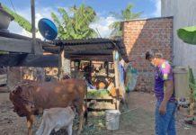 Người dân phường Đoàn Kết phun hóa chất tiêu độc khử trùng chuồng trại chăn nuôi. Ảnh: Vũ Chi