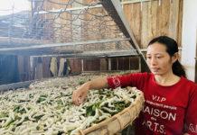 Bà Nguyễn Thị Duyên (làng Păng Gol-Phù Tiên, xã Ia Bă) mong chính quyền giúp người dân liên kết được với doanh nghiệp uy tín để bao tiêu sản phẩm. Ảnh: Nhật Hào