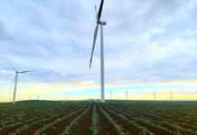 Cánh đồng điện gió của Trang trại phong Điện HBRE Chư Prông. Ảnh: Hà Duy